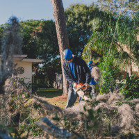 Prepare Your Trees for the Hurricane Season in Florida